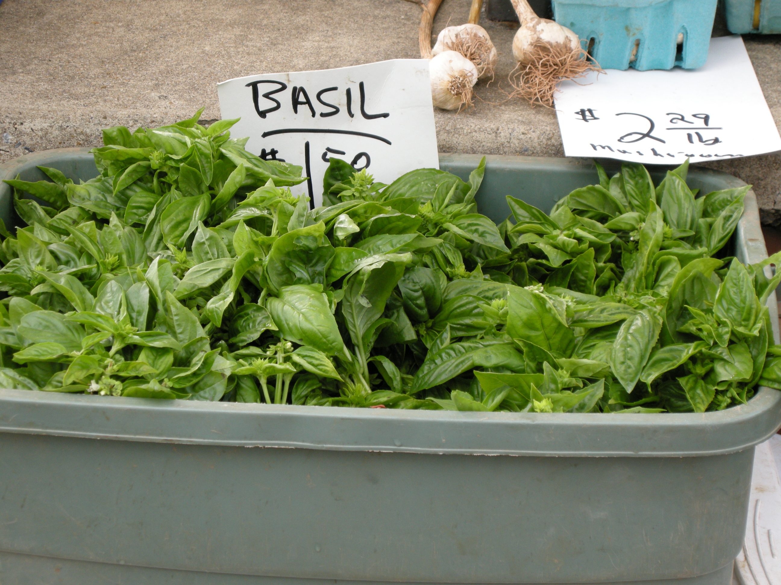 Basil for Sale!