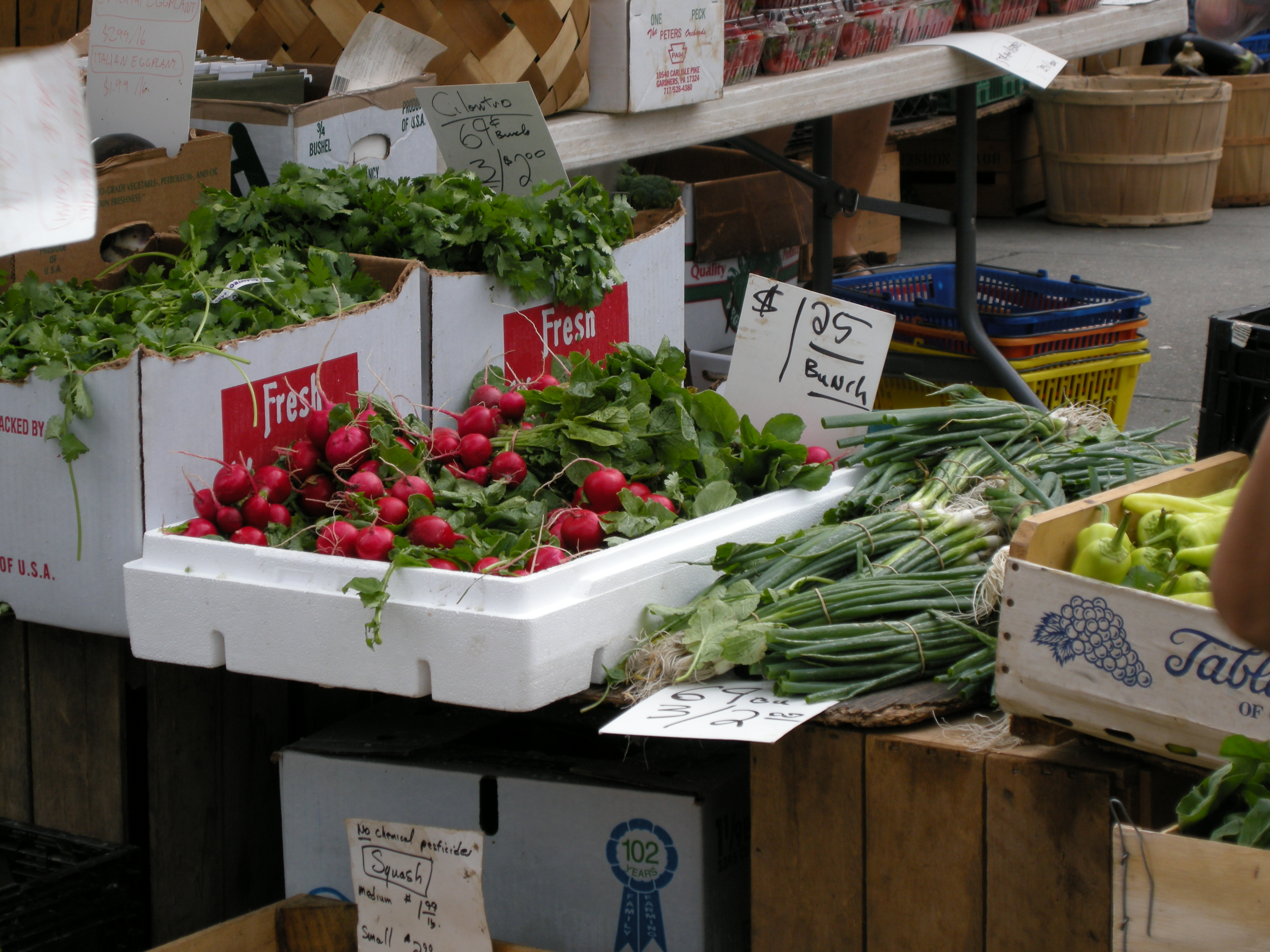 Radishes for Sale!