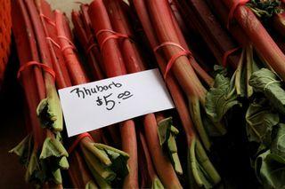 Rhubarb for Sale!