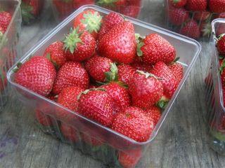 Westmoreland Strawberries