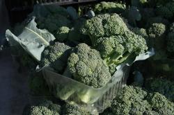 Broccoli at J&W